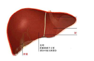 病毒性肝炎患者早期症状是什么样的了解吗