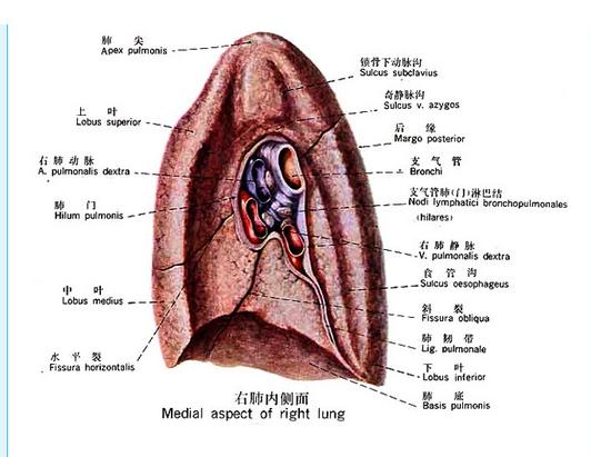 哮喘怎么治疗最好呢