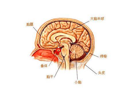 脑瘫智力正常吗