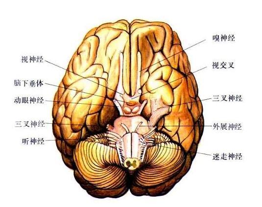 轻度脑瘫的病因有哪些