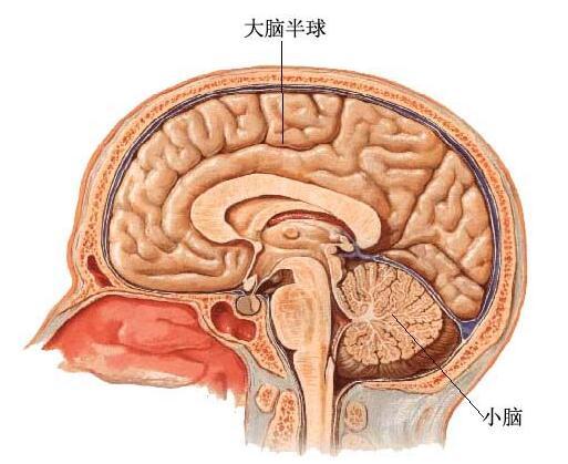 如何检查b超脑瘫