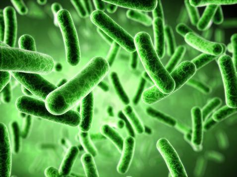 铜绿假单胞菌感染是怎么引起的呢