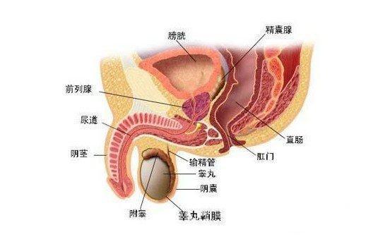 前列腺钙化冶疗有什么好方法