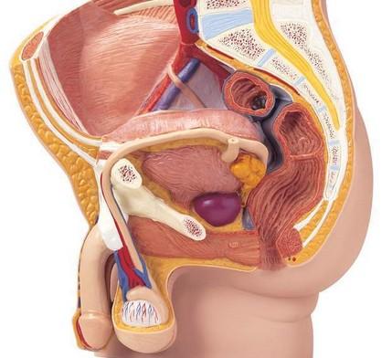 男性之痛 前列腺钙化严重吗