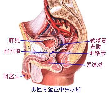 下腹隐痛 前列腺钙化是什么原因