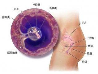 胚胎停育的检查项目有哪些呢