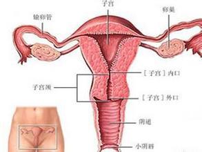 浅谈胚胎停育的八大病因
