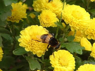 得了过敏性鼻炎怎么办 春季有五注意