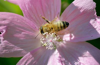 春季易引发哮喘的原因是什么呢