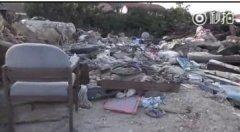 垃圾堆里的二哈被救后,为了感恩照顾其他小狗太暖心