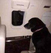 拉布拉多流浪48公里回家惨遭遗弃,可忠诚让她狗生大逆袭