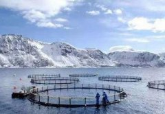 中国打造4.2亿鱼缸,一次养殖150万条三文鱼