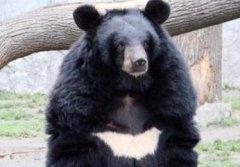 """""""熊出没""""真实上演,男子进山采药遭黑熊咬碎左眼"""