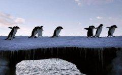 南极变暖冰山崩塌刹不住,15万只企鹅活活饿死