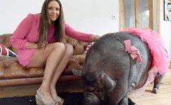 英国女子巨款买迷你宠物猪,没想到不到半年长成300斤大...