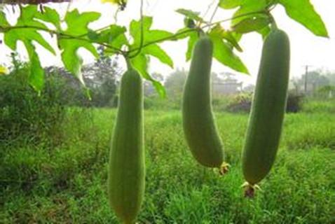 类风湿性关节炎吃什么蔬菜好