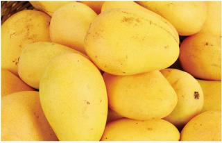 揭秘孕妇吃芒果会上火吗?
