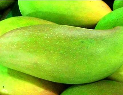 揭秘月经期吃青芒果好吗