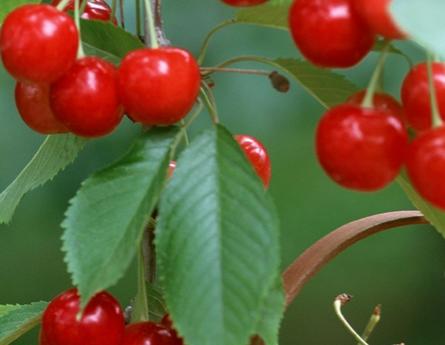 夏季吃樱桃的好处