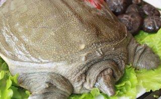 多吃甲鱼反而易导致流产