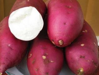 红薯不能柿子同吃  会造成胃溃疡