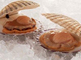 河蚌的营养价值有哪些