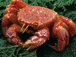 海蟹怎么保存好呢