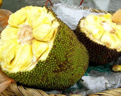 你吃菠萝蜜的方法真的对吗
