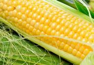男人吃玉米的好处 常吃玉米抗癌效果甚好