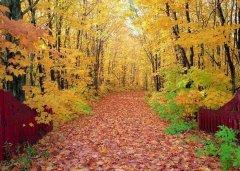 中医养生知识:秋季养生要分时期进行