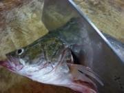 松鼠鳜鱼的做法