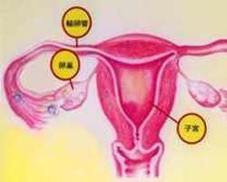 卵泡囊肿百科
