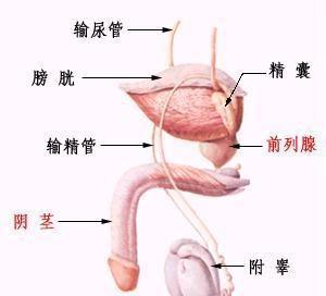 前列腺钙化百科