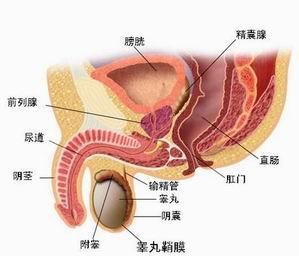前列腺炎百科