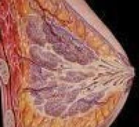 乳房疼痛百科