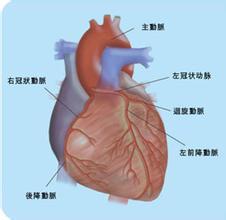 尿毒症性心肌病