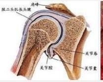 喙突胸小肌综合征