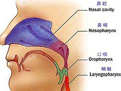 鼻咽癌百科