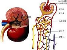 低钾血症百科