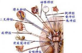 进行性延髓麻痹