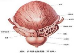 膀胱 炎熱