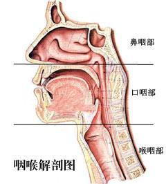 慢性咽炎百科