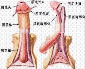 阴茎癌百科