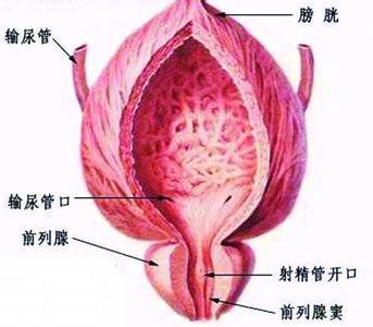 前列腺疾病百科