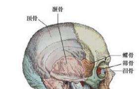 侧颅底肿瘤