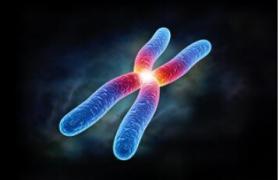 染色体介绍