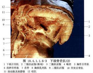 甲状舌管囊肿及瘘管切除术