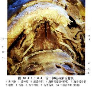 甲腺舌管囊肿及瘘切除术