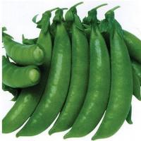 甜脆荷兰豆