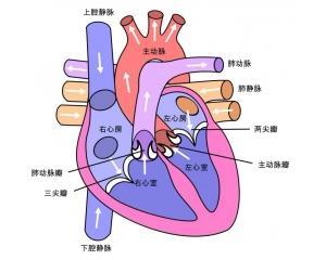 心脏功能突然失代偿